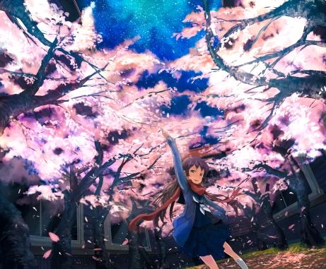 Starry Sakura